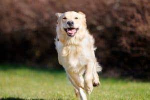 dog training news