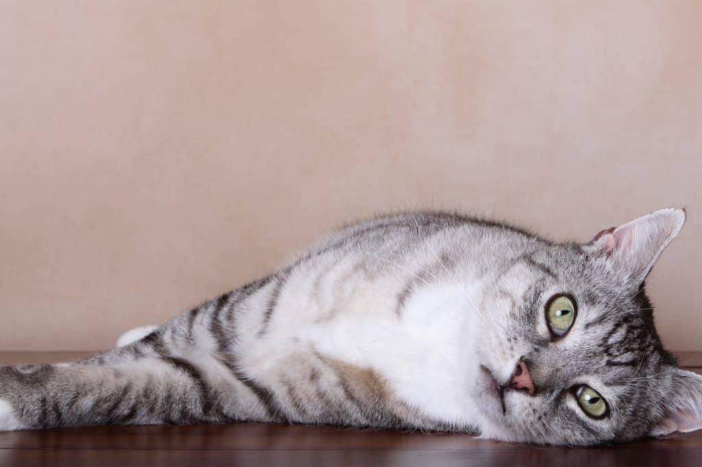 Cat wee problem