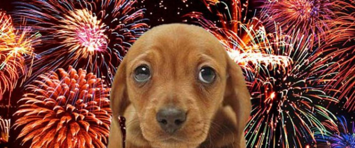 Is Your Dog Big Bang Ready? Prepping Your Dog for the Fireworks.